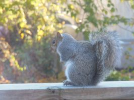 Photography - Squirrel 3: 3/4 Profile by watermelemon