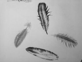 Feathers - study by mizzrammstein