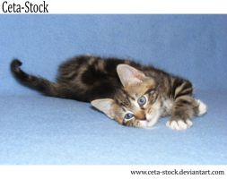 Kitten 7 by Ceta-Stock