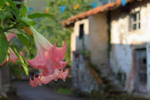 Asturias behind the flowers by Jorapache