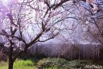 Blossom Garden by MoPotter