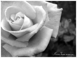 - Rose I - by kissesfrom