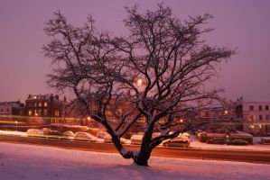 Winter Tree by CitizenJustin