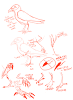 quick birb feet guide?? by Magg0try