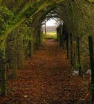 Autumn Path by Its-Only-Stock