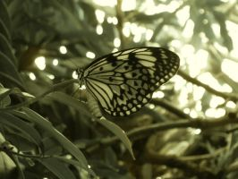 butterfly by ellida
