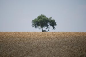 Lonely Tree 4 by Sed-rah-Stock
