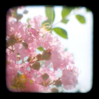 TTV-Flowers by Dreams-Made-Flesh