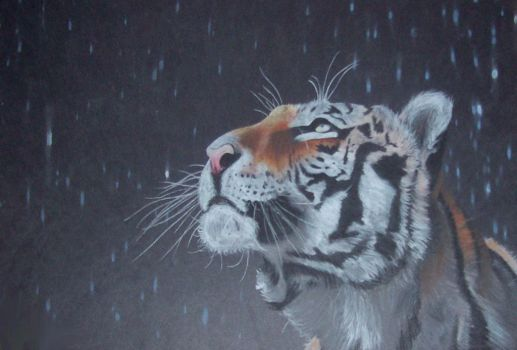 Tiger in the rain by mehipnotizas