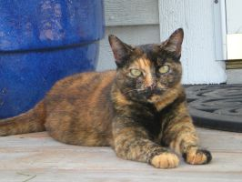 Cat on a Porch by dancingmelons97