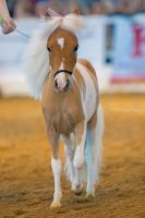 American miniature horse by alesyasafe