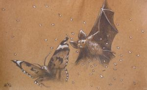 Bats and Butterflies by Weyzen