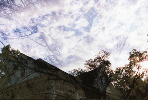 Trees in the Clouds (FILM) by shelbyrenee