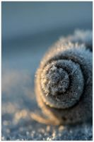 Frozen Spirals by MushroomMagic