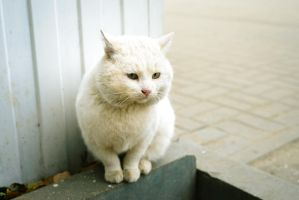 Cat, who lives near the store by Anna-Belash