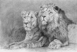 Lions by Horselover10111