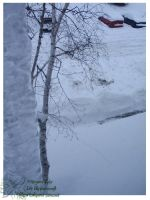 2010 15 02 Snow Pictures 03 by lilly-peacecraft