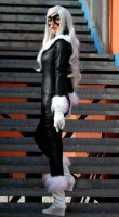 Black cat by MaddMorgana