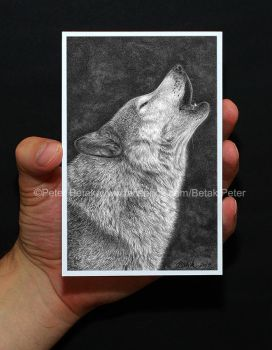Photorealistic postcard size volf drawing. by petbet1