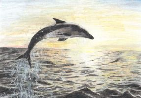 Dolphin by In-The-Distance