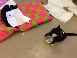 Player and Watcher playing with paper towel by LishaColors