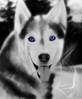husky by duelord