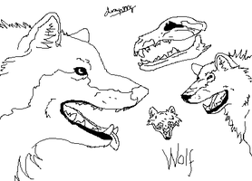Wolf Sketches on Paint by DragonzFire95