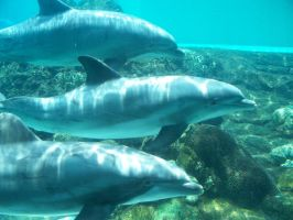 Dolphins by Kake-129