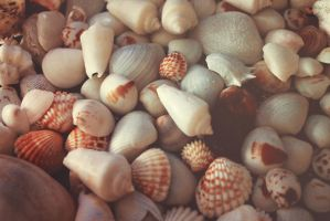 Seashells by llllollll