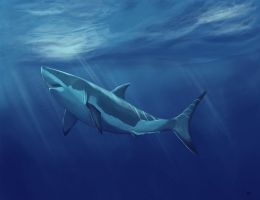 Great White by Maeocy
