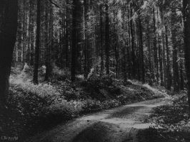 Follow The Path by Weissglut