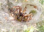 Southwold - Labyrinth Spiders by Okavanga