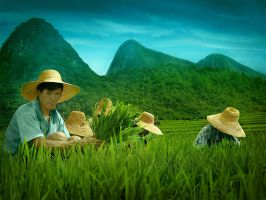 the rice field 3 by nask0