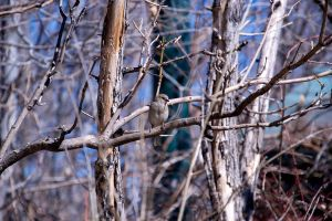 Blending in with Branches by TVLYDesign