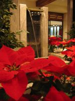 fountains, poinsettas by thecryopensup