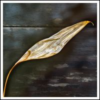 dry leaf on wood by zsphere