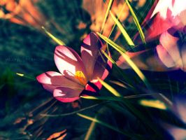 Spring is Bursting Out. by MellyBaldin
