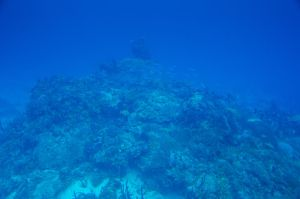 Barrier Reef 03 by FairieGoodMother