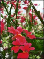 Many red flowers II by Pollon82
