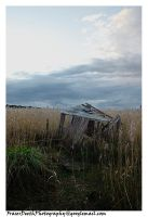Wetlands - Shed by StrawBeth