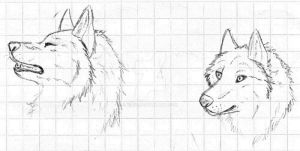 sketch rush_ wolf study by Zire9