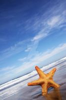 Starfish and The Sea by Spanishalex
