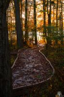 The Path Of Light by JustinDeRosa