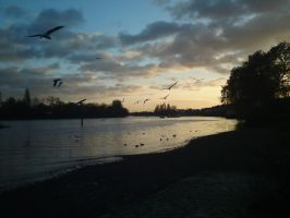 By the River Thames at Chiswick by loganmiracle