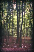 Polluted Forrest by knolte4fun