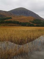 Reed Reflections by piglet365