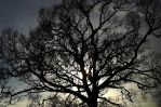 Tree Copy by graphic-rusty