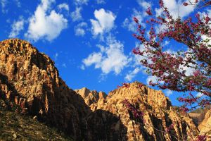 Flower tree and mountains by Celem