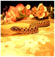 makoto and flowers 2 :hognose: by TheMightyMullet