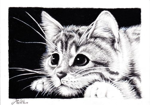 Drawing Cat | Animals by J-Ssi
